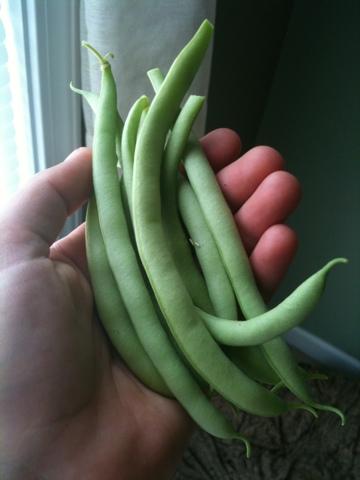 Henderson's Black Valentine Beans
