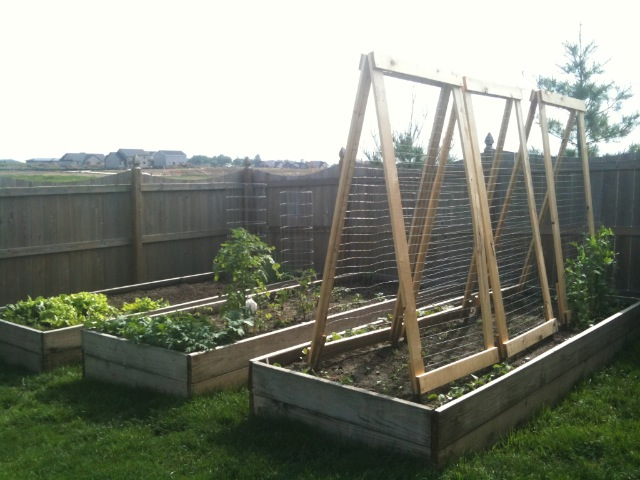 Raised Beds in Spring
