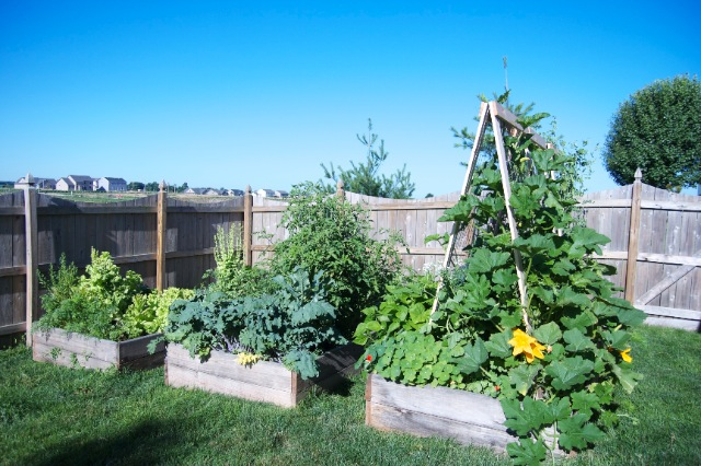 Raised Beds in July