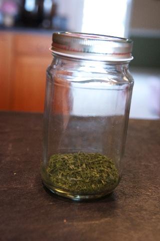 Catnip in Jar