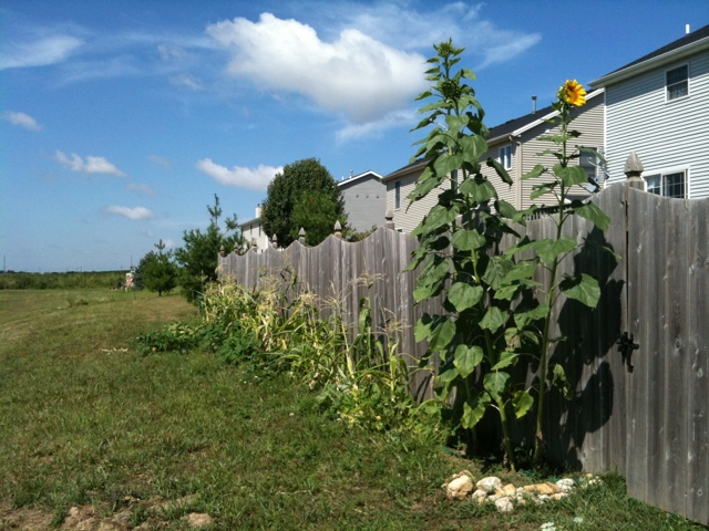 Garden behind the fence