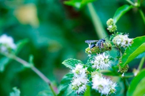 Blue Wasp