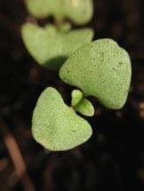seedling.jpg