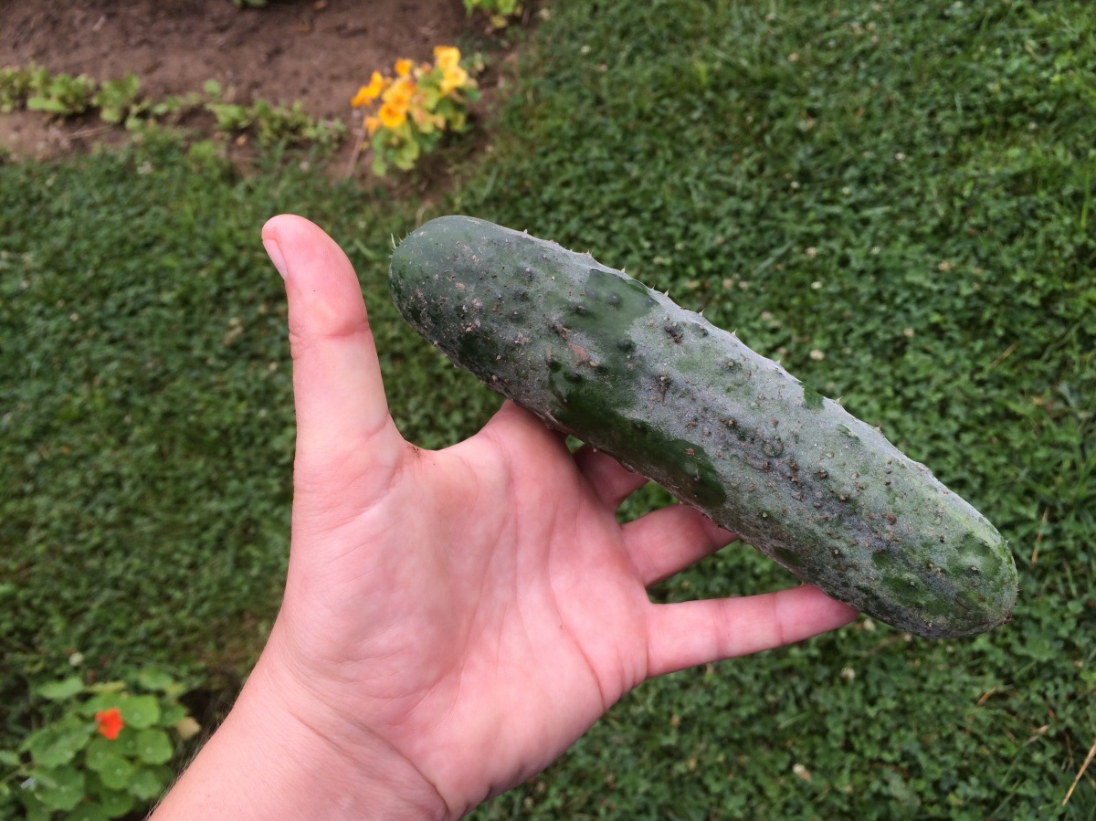 holding a cucumber